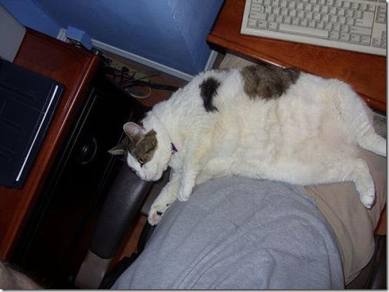fat_cats_18