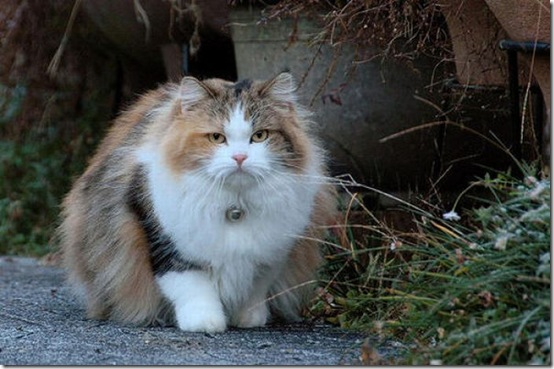 fat_cats_46