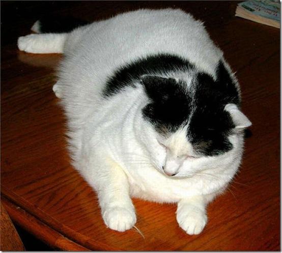 fat_cats_59