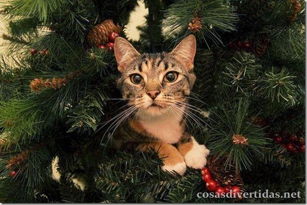 cosasdivertidas.net  gatos (3)