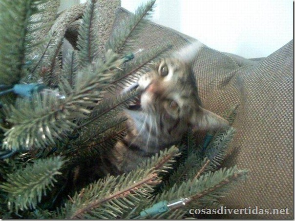 cosasdivertidas.net  gatos (7)