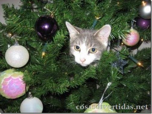 cosasdivertidas.net  gatos (8)