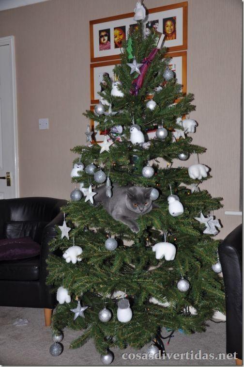 cosasdivertidas.net  gatos (10)