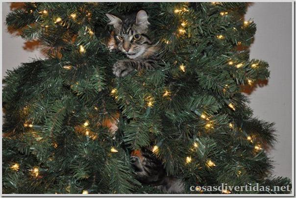 cosasdivertidas.net  gatos (17)