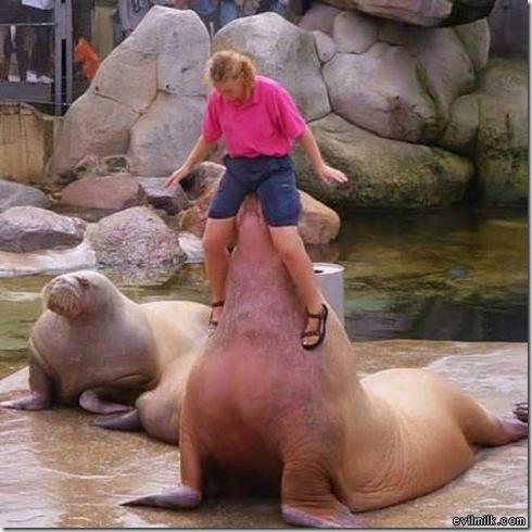 Dirty_Walrus