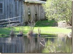 WK 2 Duck pond