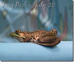 July 22 Frog