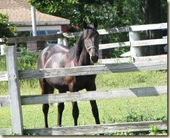 09 12 Black horse
