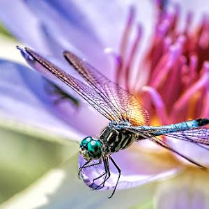 Dragonfly-3.jpg