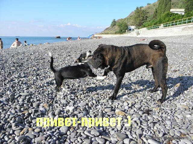 отдых с собакой в Солнечногорском (восток Большой Алушты), Крым, Черное море, 2010