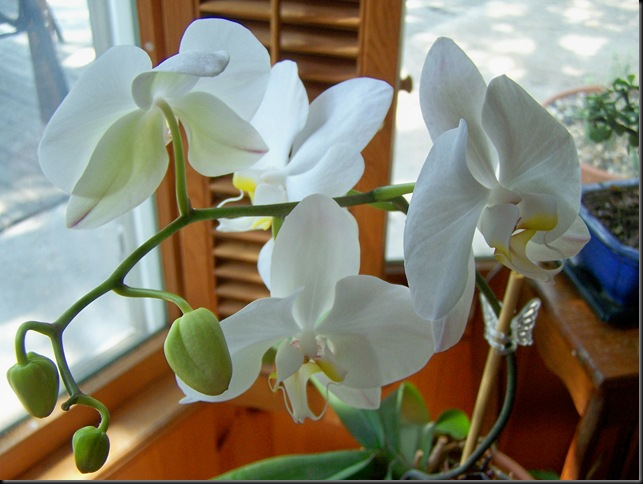 orchid 2010 2