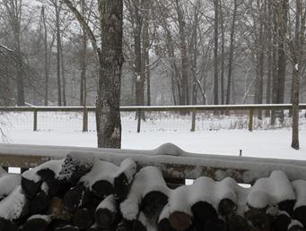 2nd snow 012910 (3)