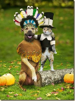 Thanksgiving animals