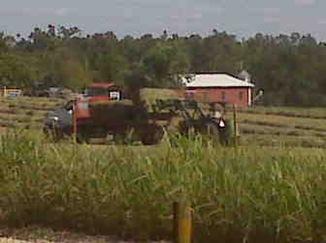 Wood hay 2009