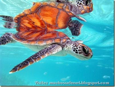 Monde animal-tortues