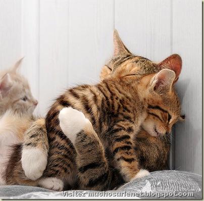Monde animal-chatons