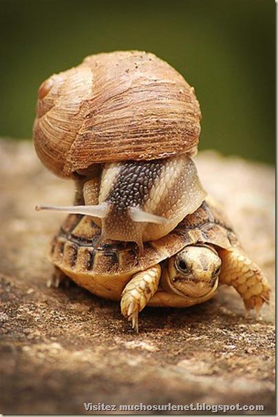 Monde animal-escargot et tortue