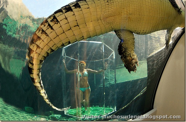 Nager avec les crocodiles_Parc Crocosaurus Crique-5