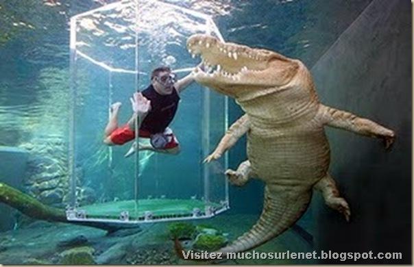 Nager avec les crocodiles_Parc Crocosaurus Crique