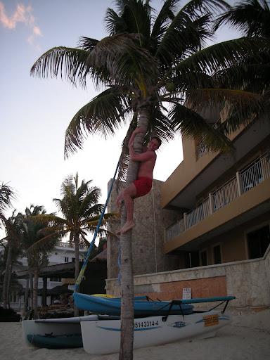 Na palmie