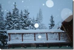 wintersnow 002