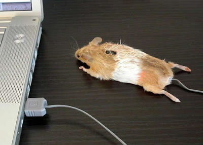 Mouse, literal