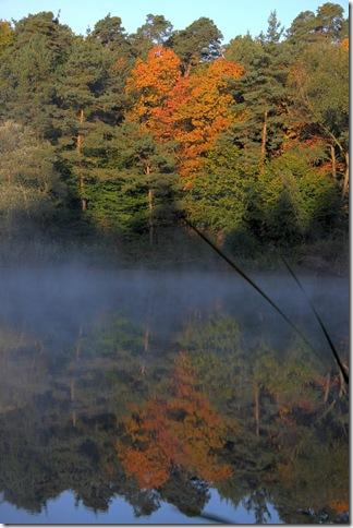 walldorf wald pond_2636 (683x1024)