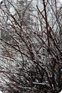 snowfeb24