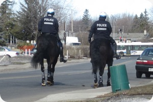 policehorse