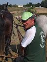 """Pour commander un polo(25€) ou une casquette(10€) """"Verdille attelage"""""""
