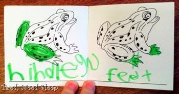 frog nomenclature 5