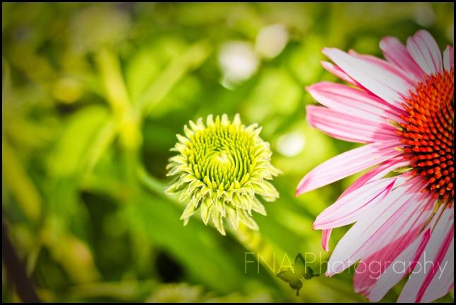 Flowersbloom-3