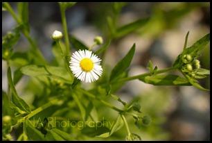 Flowersbloom-11