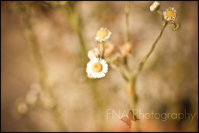 Flowersbloom-9