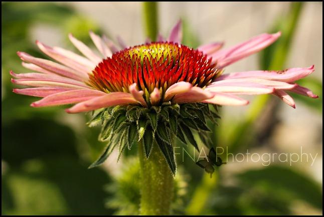 Flowersbloom-13