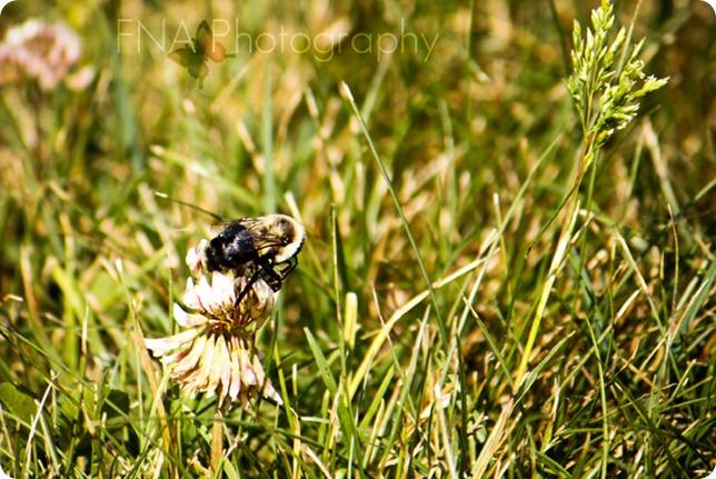 bumblebee-3