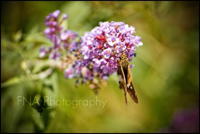 flower-butterfly-3