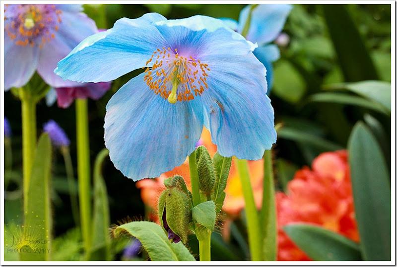 flowers-0617