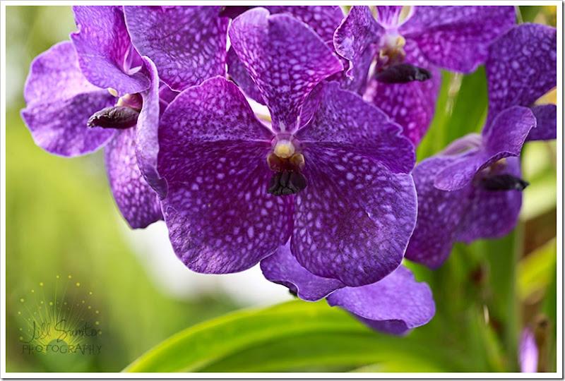 flowers-0773