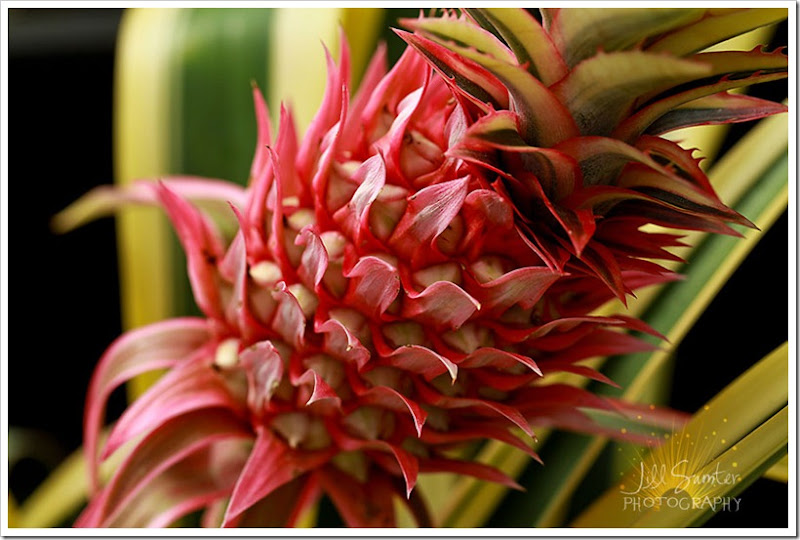 flowers-0794