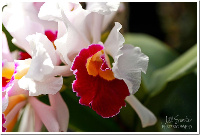 flowers-0836