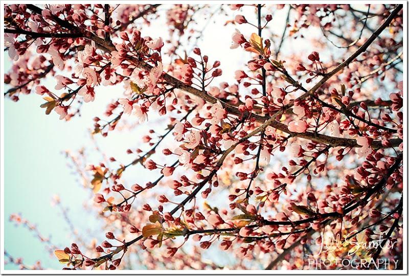 spring-1529