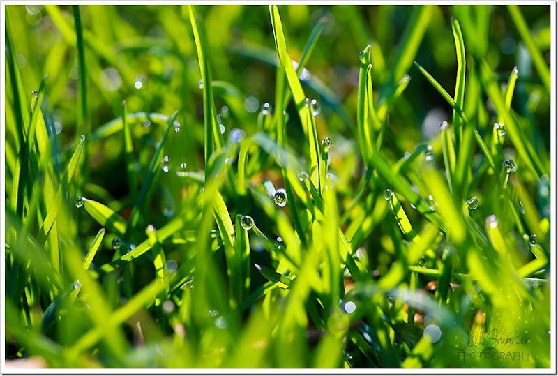 grass-1639