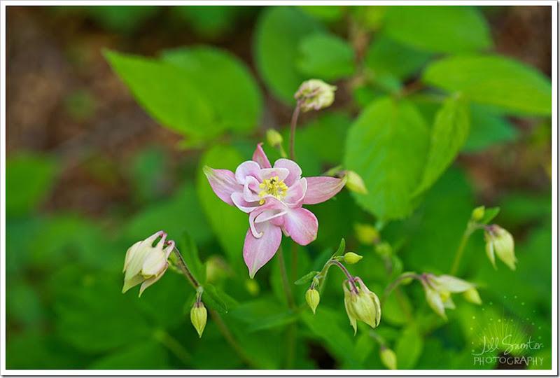 flowers-3199