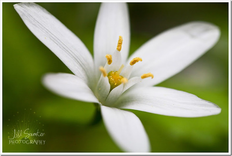 flowers-3383