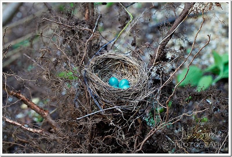 nest-3627