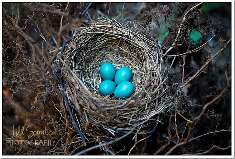 nest-3630