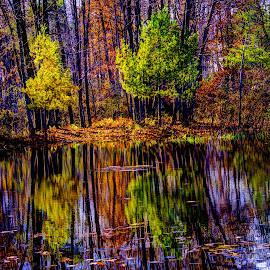 Painted forest reflections by Marilyn Magnuson - Landscapes Forests ( water reflections, fall forest, fall water reflections, fall forest reflections, fall reflections )