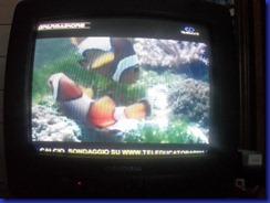 teleducato pesce d aprile