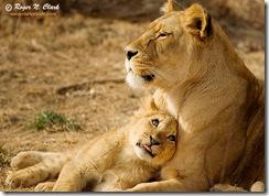 lion.cub.c02